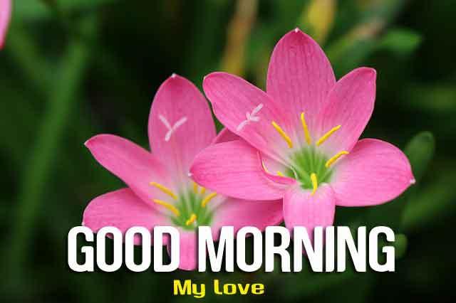 nice flower Good Morning hd download