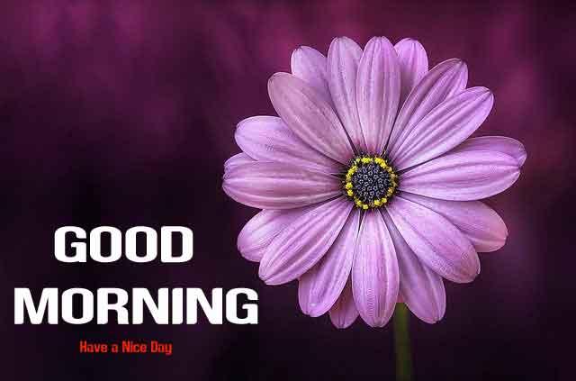 nice flower Good Morning hd wallpaper