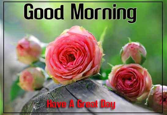 nice flower Good Morning hd