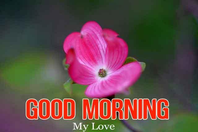red flower Good Morning hd