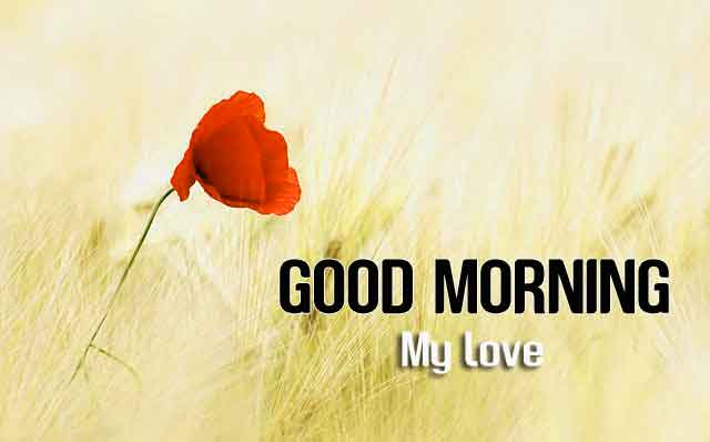 1453+ good morning handsome images Pics Download