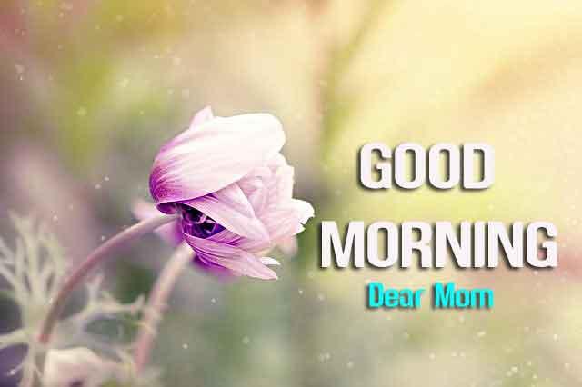 sad flower Good Morning hd download