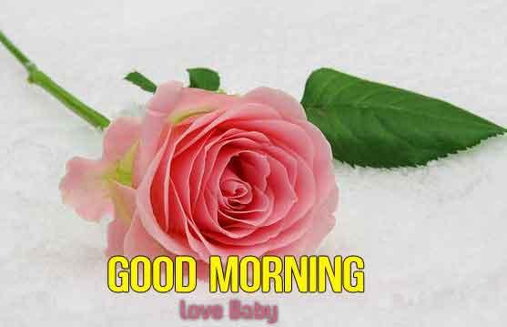 sad rose flower Good Morning hd download