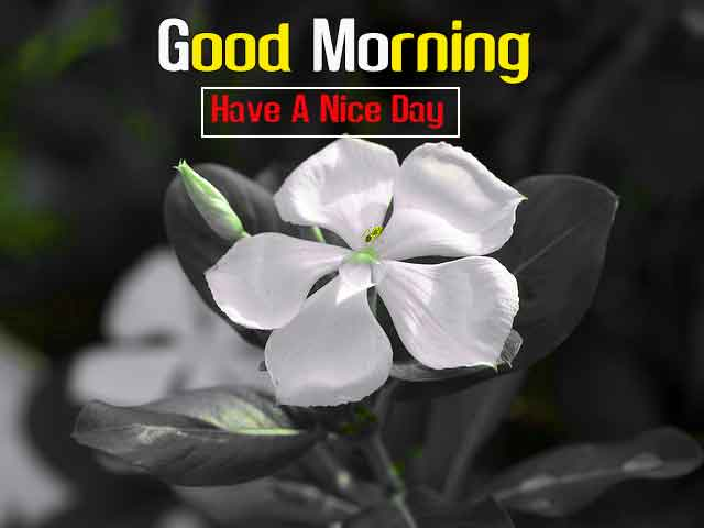small white flower Good Morning hd download