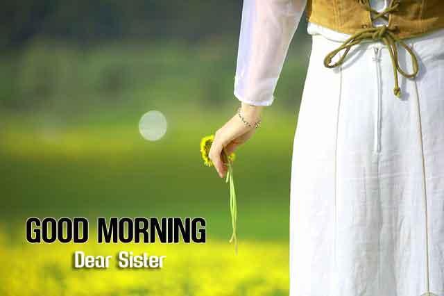 summer flower Good Morning hd download