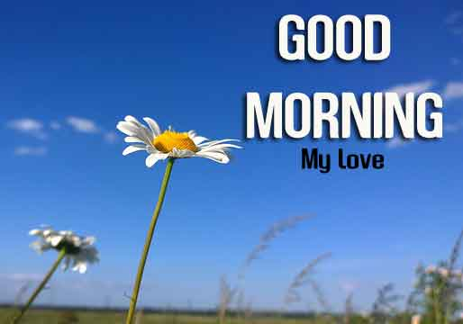 sunrise flower Good Morning hd download