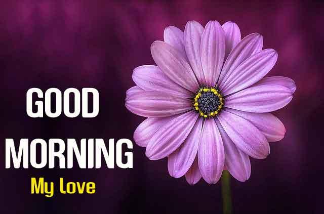 sunrise flower Good Morning my love wallpaper