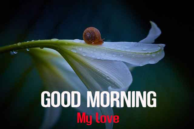 799+ Best Good Morning Images Pics Wallpaper Photo For Flower