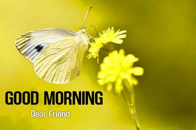 192+ Good Morning 3D Photos Images Download