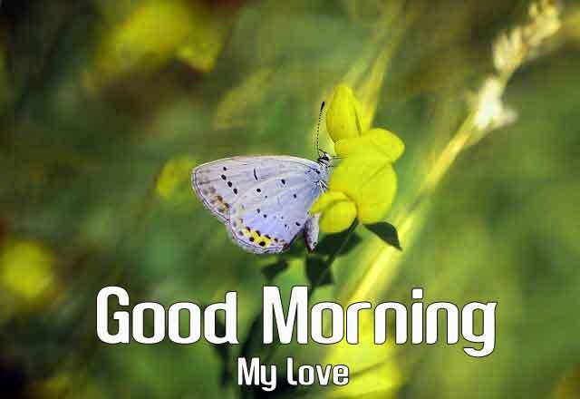 white butterfly Good Morning wallpaper