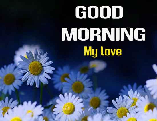 white flower Good Morning hd wallpaper