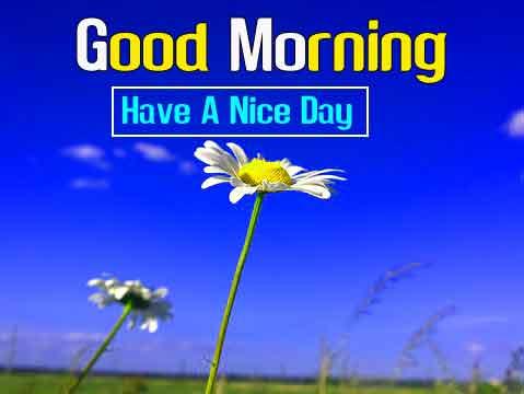 yellow flower Good Morning hd download 2