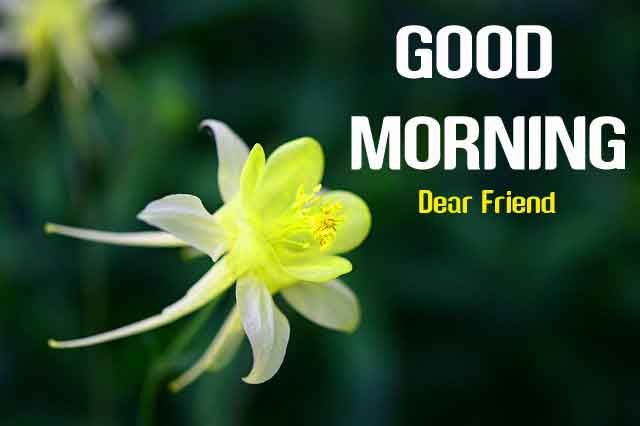 189+ Beautiful Nature Flower Good Morning Wishes Images HD 1080p