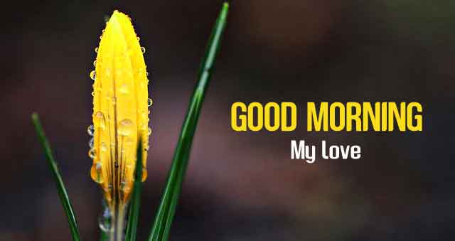 yellow flower Good Morning my love images