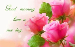 gd mrng Pics