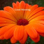 184+ Flower Good morning HD Images Wallpaper For Whatsapp/ Facebook