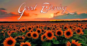 Good Evening Pictures Download