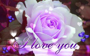 Flower i love photo pics download