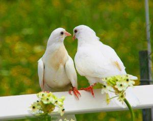 Love Images Pics Photo Download
