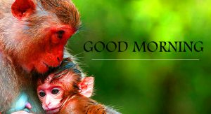 Emotion Good Morning Pictures Download