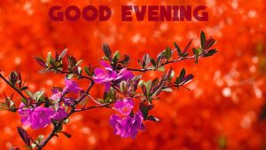 HD Good Evening Images