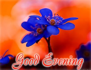 Good Evening Images For Whatsaap