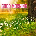 Nature Good Morning Pics Images Download