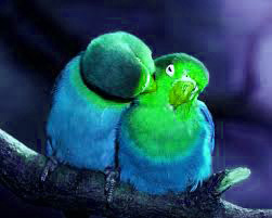 Love Photo Pics For Whatsaap