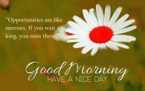 Sunday Happy Good Morning Photo