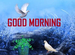 Download Good Morning Images Download