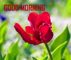 Flower Good Morning Pics Download