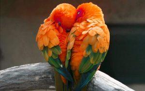 Love Couple Photo Pics Free Download