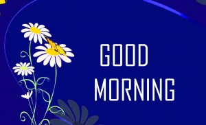 Flower Good Morning HD Pictures Free Download for Whatsapp & Facebook