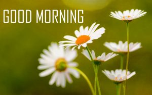 Flower Good Morning Photo Pics Images Wallpaper Photo Free HD Download