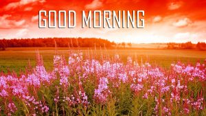 Flower Good Morning Photo Wallpaper Photo Pics HD