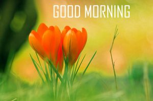 Flower Good Morning Wallpaper HD Download