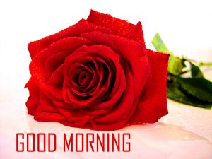 Flower Good Morning Photo Pictures HD Images Download