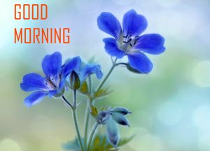 Flower Good Morning Images Photo Pictures Download