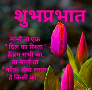 Hindi Quotes Flower Good Morning Photo In HD