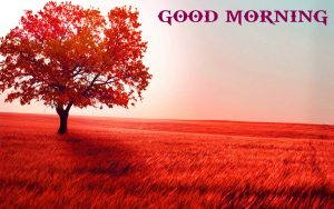 Good Morning 3D Photos Pictures Free Download