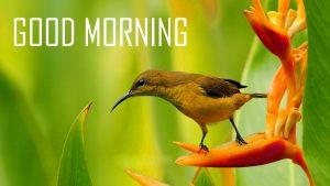 Flower Good Morning Images HD Download