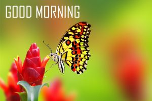Flower Good Morning Photo Pics Pictures Download