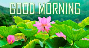 Flower Good Morning Photo Pictures Wallpaper Download