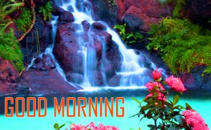 Flower Good Morning Photo Pic Images HD Download for Whatsapp & Facebook
