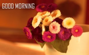 Flower Good Morning Pictures Image Download for Whatsapp & Facebook