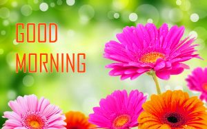 Flower Good Morning Photo Pics In HD Download for Whatsapp & Facebook