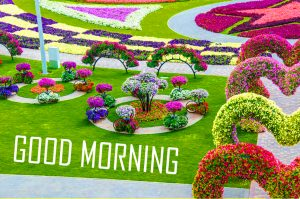 Flower Good Morning Images Pics Wallpaper In HD