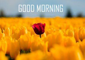 Sunflower Good Morning 3D Photos Wallpaper Download