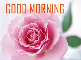 Flower Good Morning Images In HD Download