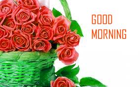 Red Rose Flower Good Morning Images HD Download